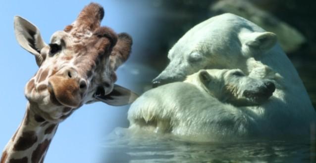 Tip van de Redactie: Zoo Experience – Beestachtig uitje in Amersfoort